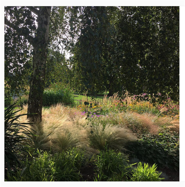 Mixed borders near the Jodrell and Grass Farden Kew Gardens. Credit: Kew Gardens Instagram
